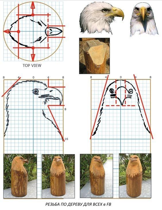 Орел - пропорции головы.