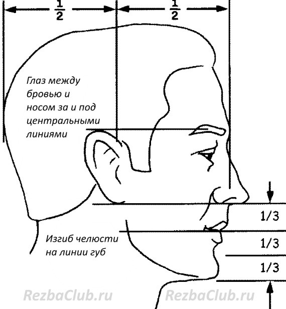 Пропорции лица -профиль