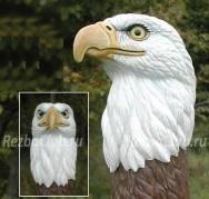 Как вырезать голову Белоголового Орлана из дерева